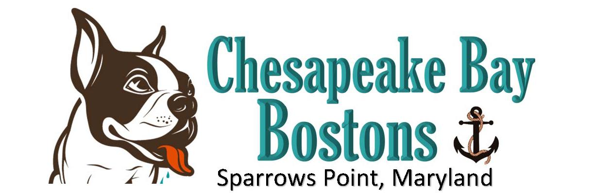 Chesapeake Bay Boston Terriers